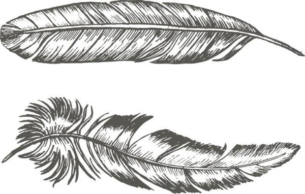 Tatuajes de plumas grandes costado