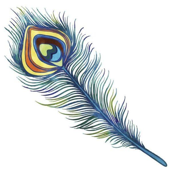 Tatuajes de plumas grandes pavo real