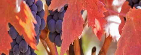 nuestras-uvas Bodeas Protos