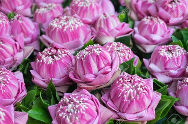 cuales-son-las-flores-preferidas-para-un-ramo-el-dia-de-san-valentin-2015-flor-loto