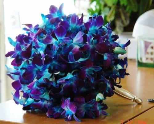 cuales-son-las-flores-preferidas-para-un-ramo-el-dia-de-san-valentin-2015-orquideas-azules