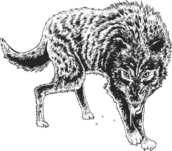 Tatuajes de lobos grandes cuerpo en posicion de ataque