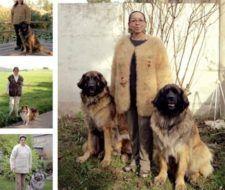 Tendencia moda otoño invierno 2008 – 2009: suéteres hechos de lana de perro